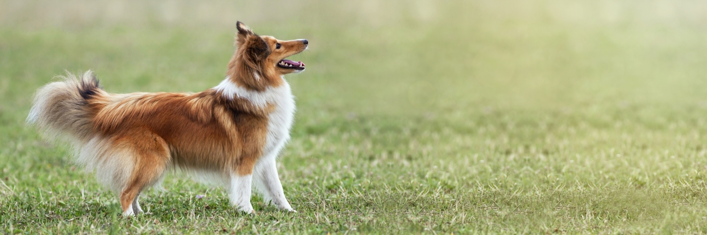 Bild Familienhund 2