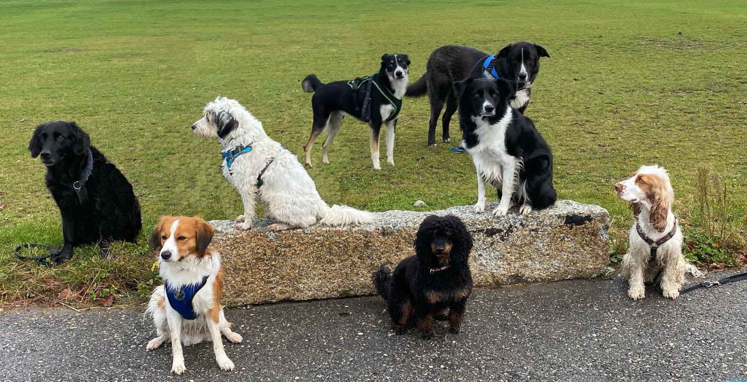Bild Familienhund 1